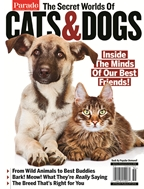 The Secret Worlds of Cats & Dogs
